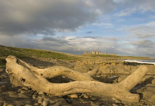 Driftwood & Dunstanburgh by nstewart