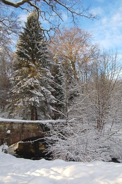 Winter Wonderland by happysnappa