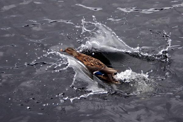 splash landing by Ada