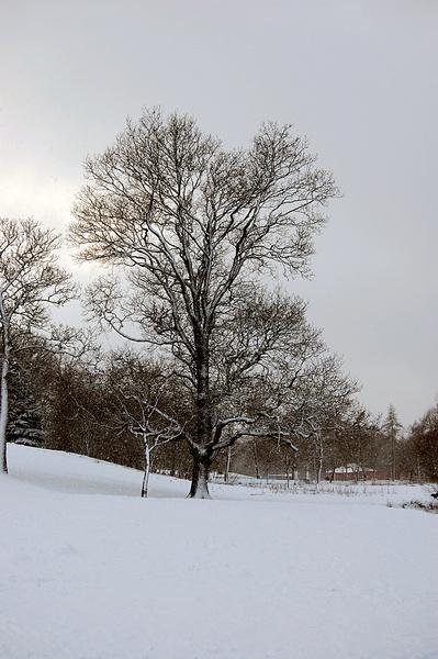winter by geosami
