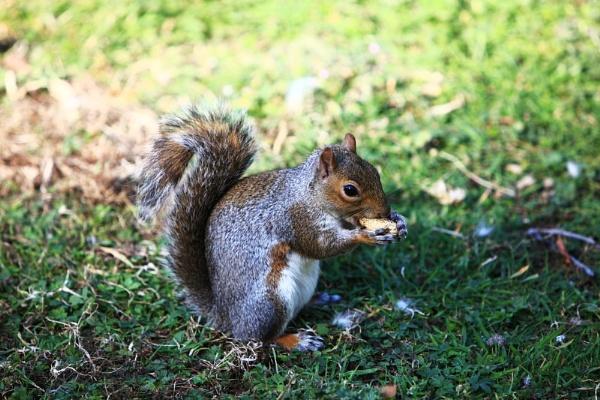 Nuts by PeteBrown