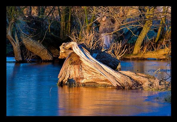 Fire & Ice in the wood by JackAllTog