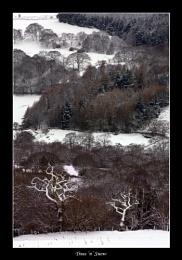 Trees 'n' Snow