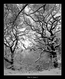 Trees 'n' Snow II