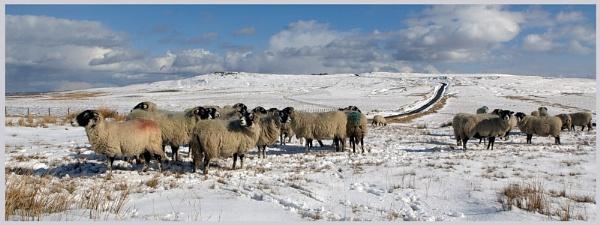 The Tan Hill gang by YorkshireSam