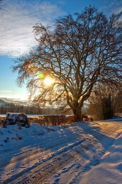 winter tree by luckybry