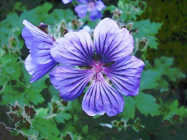 Purple Flower by lev93