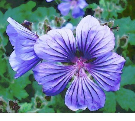 Purple Flower 2 by lev93