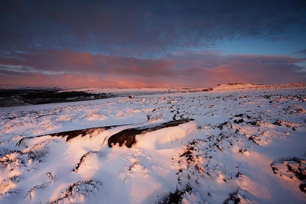 Winter Pinks by cdm36