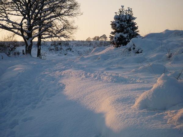 Winter Wonderland by simonshere