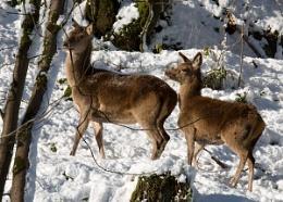 2 dear deer
