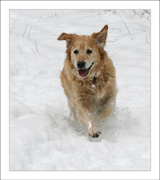 Snow Run by conrad