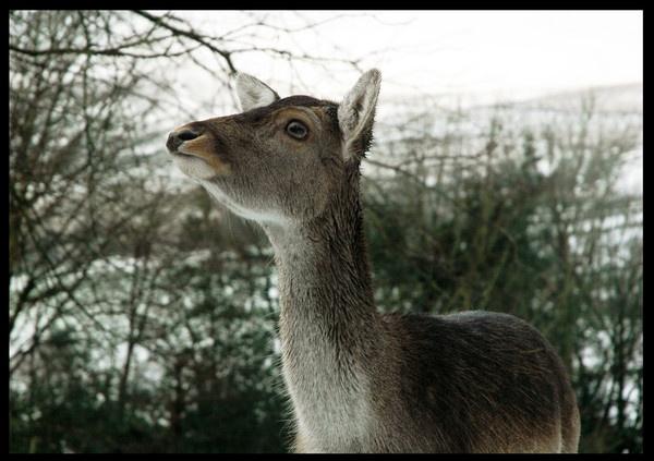 oh deer. by kilo watt