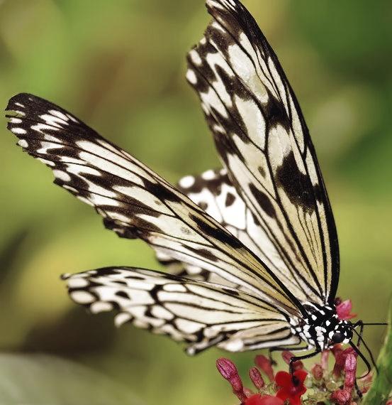 Butterfly World by gavmorein
