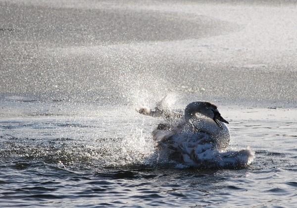 Just splashing around by King0