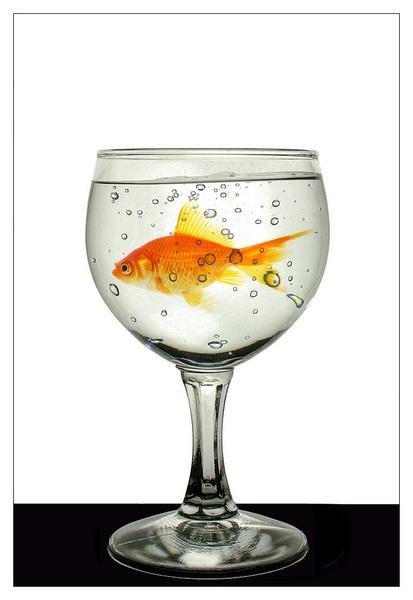 glass by cattyal