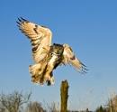 Eagle Owl by kevspiers