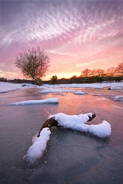New Forest - The Freezer