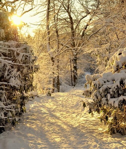 Snow Scenes by MissPea