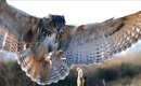 eagle owl (Turner/Kaln) by littlejennywren