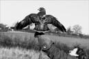 leighton the buzzard by littlejennywren