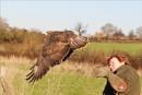 buzzard leighton by littlejennywren