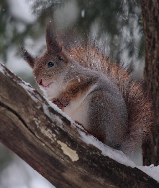 Meditating on a tree by Sergey_SG