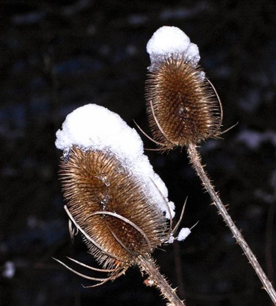 snow wigs by HuntedDragon