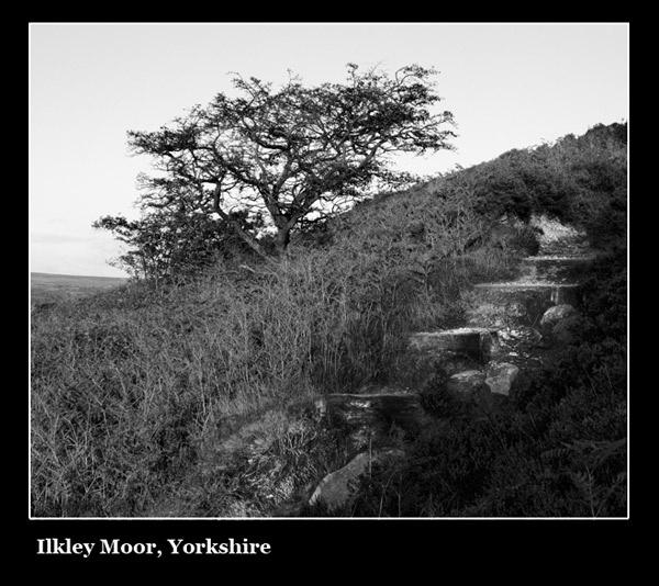 Ilkley Moor by young_al