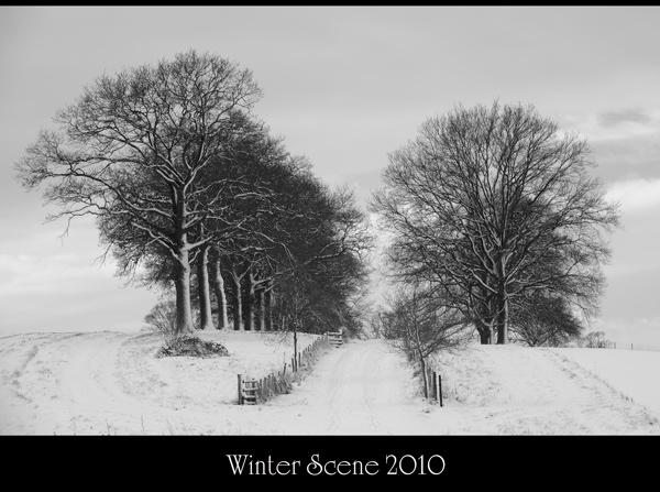 Winter Scene 2010 by maroondah