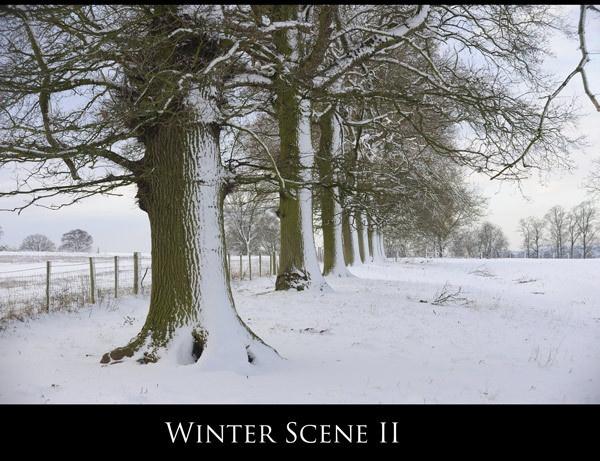 Winter Scene II by maroondah