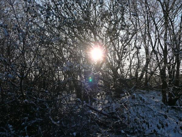 sunlight 2 by quattro