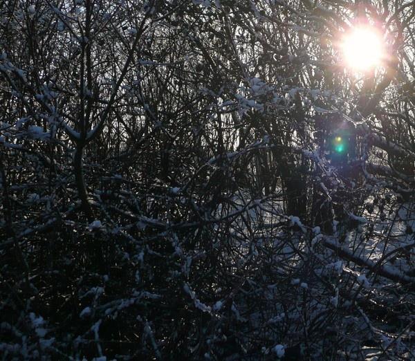 sunlight through trees by quattro