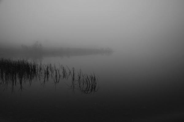 Fog by harald65