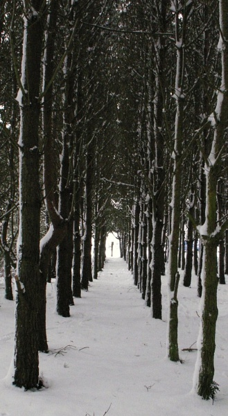 Tunnel of Trees by paulmeyer