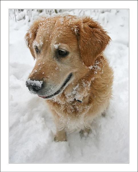 Snowy Portrait by conrad