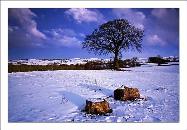 Tree by TeresaH