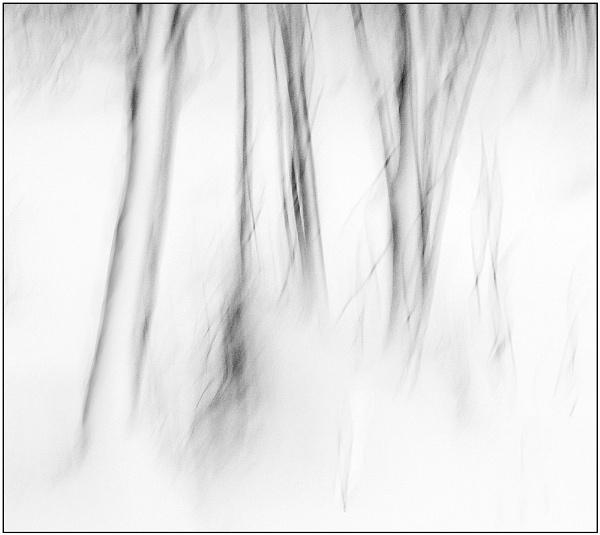 Winter...... by MalcolmM