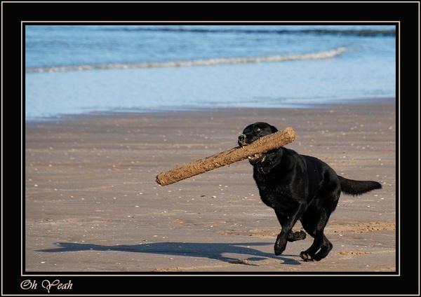 Beach Dog by ITPSnapper