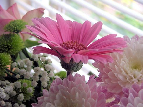 Pinked [= by Rosie_cheeks