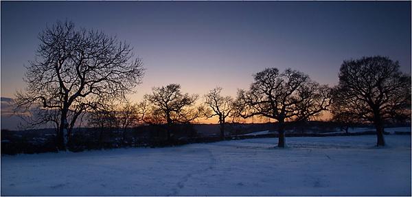 Twilight Fields by ringyneck