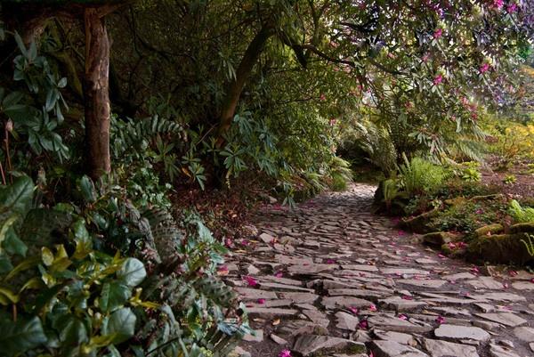 Hidden Path by Ratcatcher