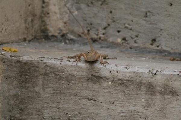 Chameleon in action by aj14