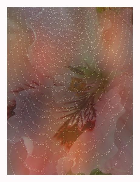 Flower/Web by auraalan