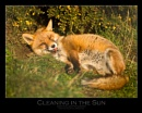 Cleaning in the Sun by WildLight