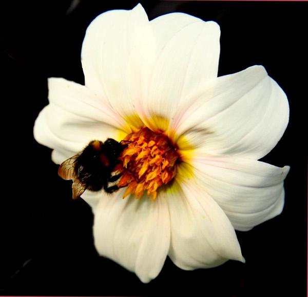 Blooming Bee by Ada