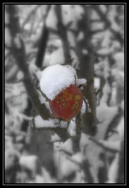 Winter Apple by RedKen