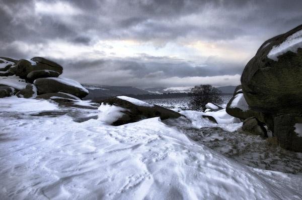 Snowy Owler II by dwillows