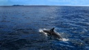 Dolphin by palmypom