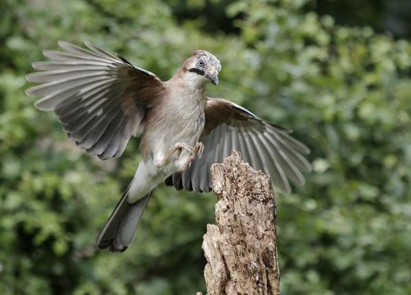 Jay landing by pmaccyd